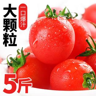 圣女果千禧小番茄5斤新鲜水果当季自然熟整箱蔬菜西红柿生吃包邮