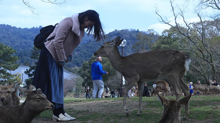 林深时见鹿——奈良?#35753;?#21714;一日游