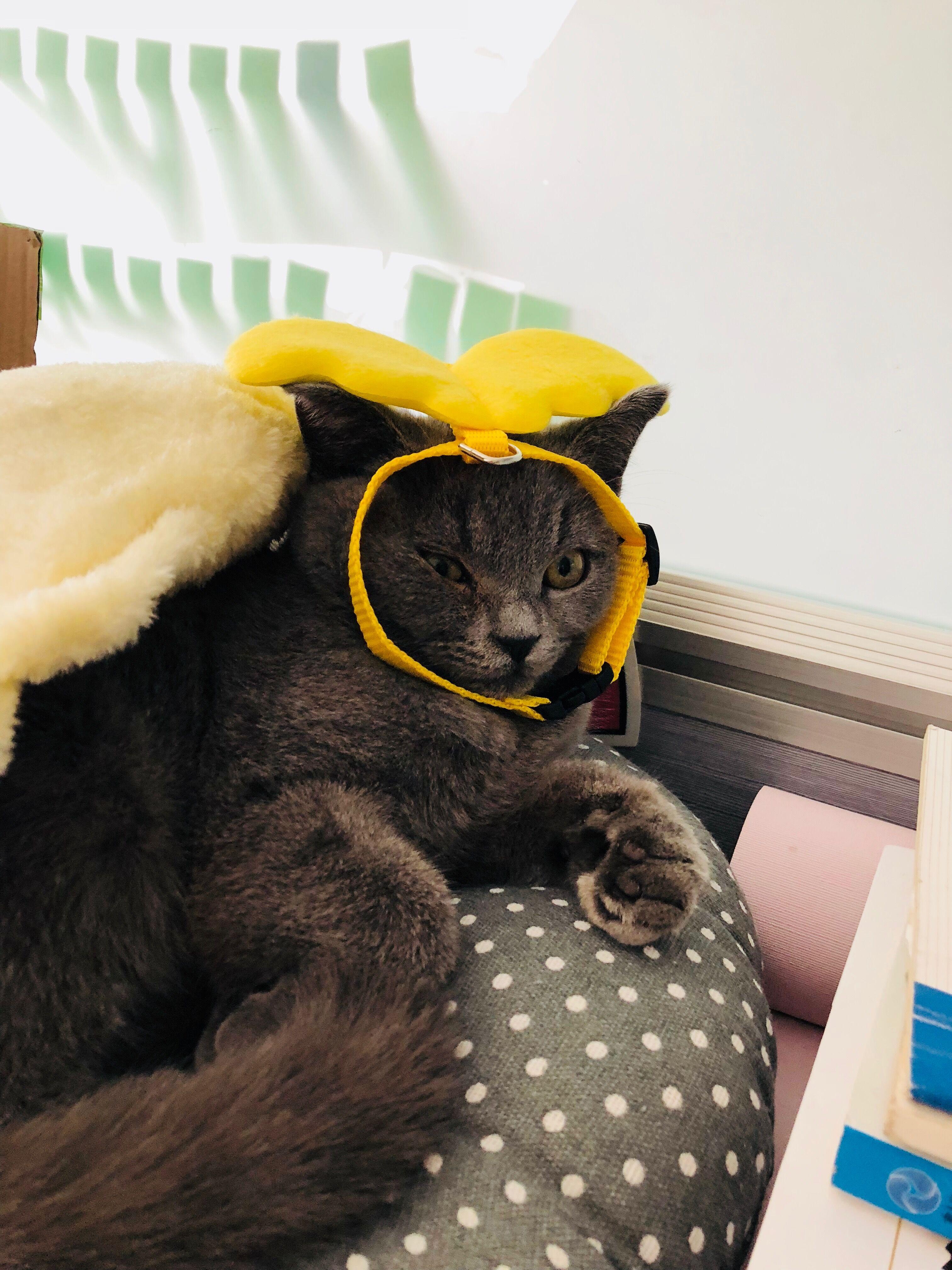 高冷猫咪难亲近,猫奴有没有翻身之日?