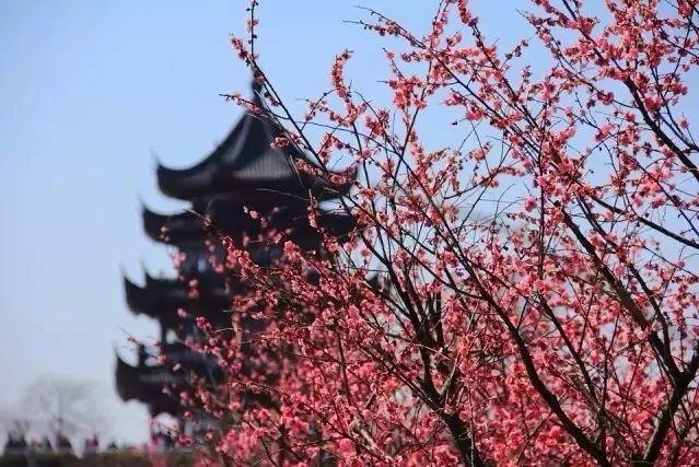 2018最全的上海赏花攻略来了