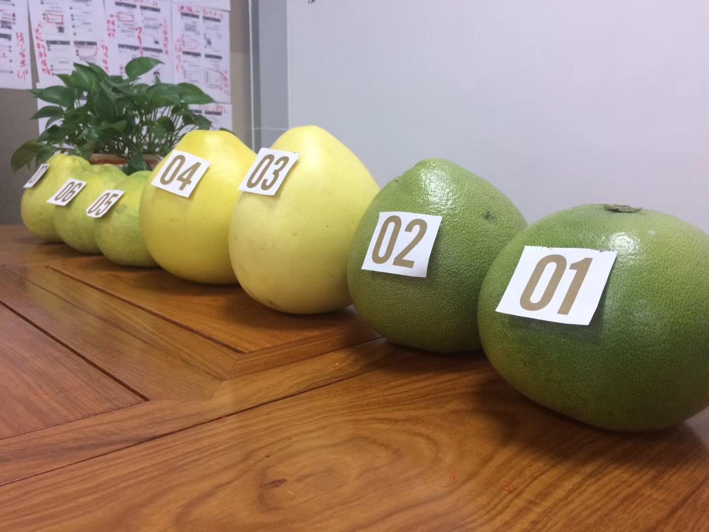 别吃鸡了,来尝尝世界四大名柚吧!