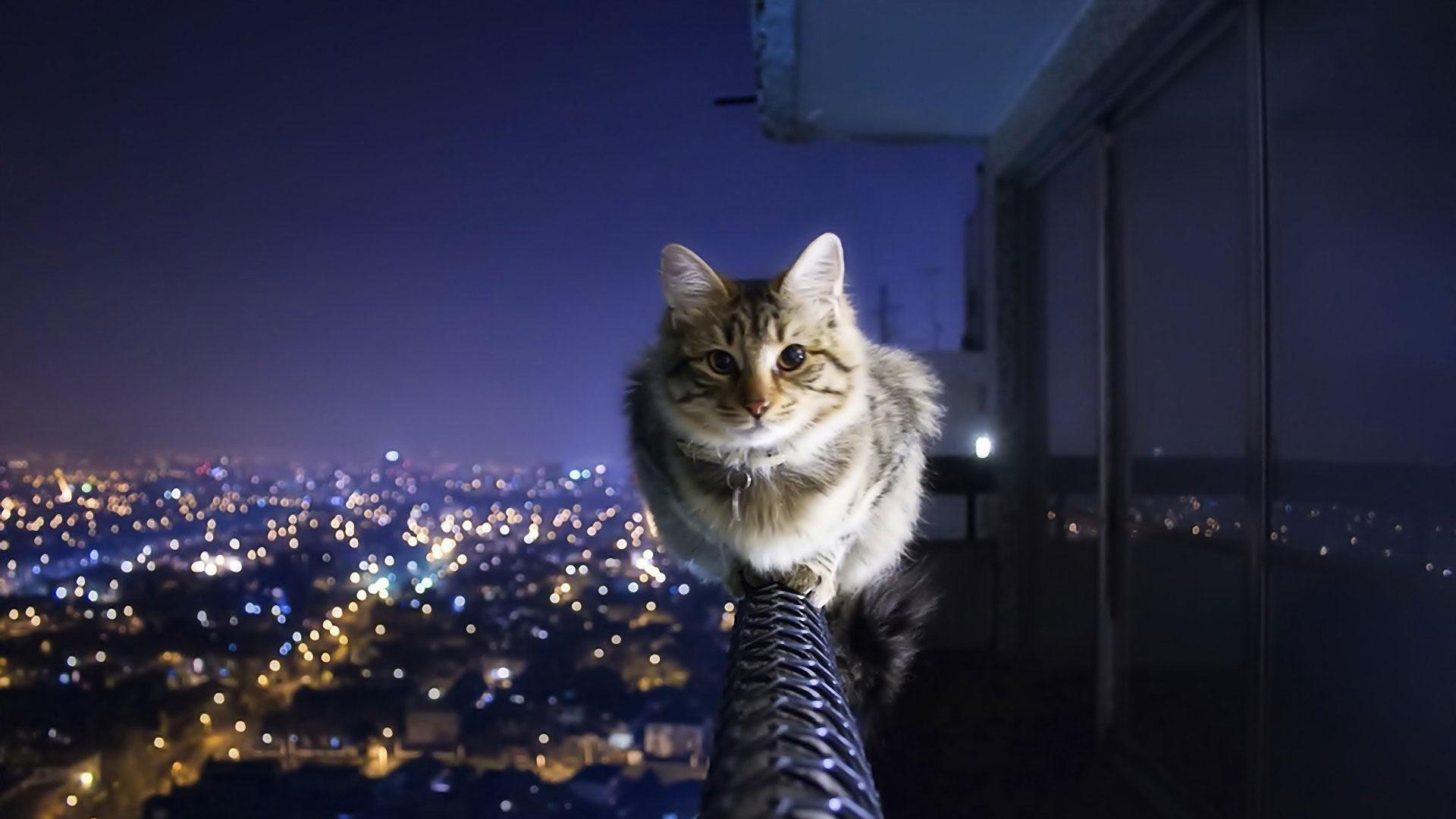 养猫以后,发现天花板上都能长猫
