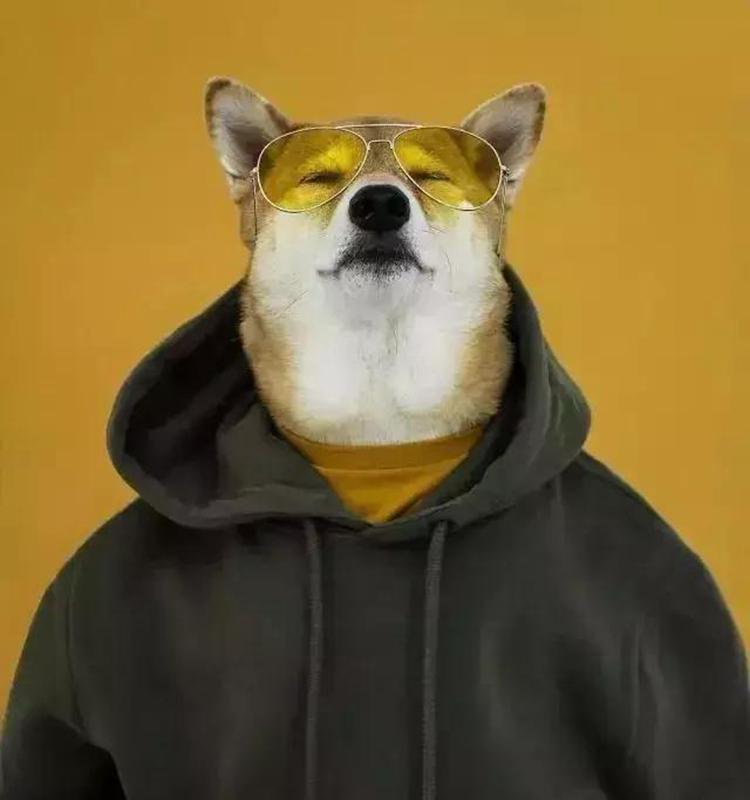 碰上中国狗年,全球的时尚圈都玩疯了!