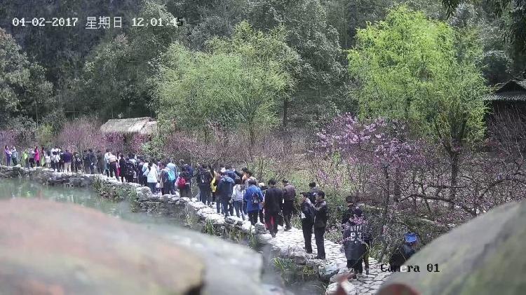 酉阳桃花源清明小长假首日接待2.8万人次