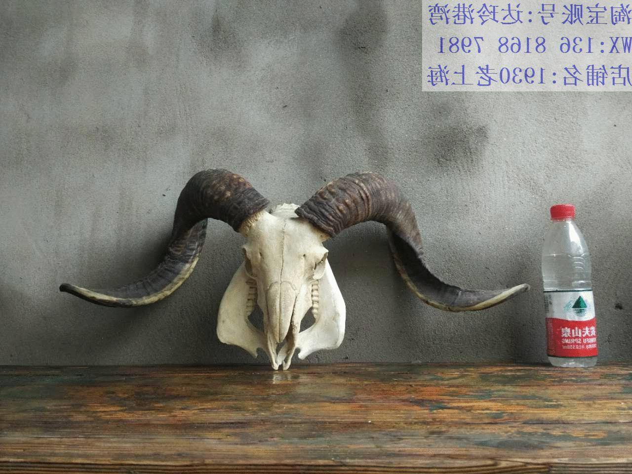 Горячей тибет площадь правда глава декоративный козел чистая овечья як тау кость тау ремесла статья комнатный декоративный корова ворота пакистан гонка