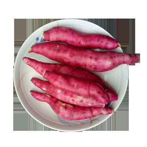 新鲜红薯蜜薯蒸烤超甜无丝地瓜5斤包邮