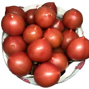 西红柿新鲜5斤生吃小番茄