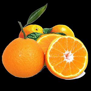 果园现货四川春见耙耙新鲜包邮橘柑