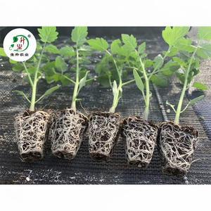 生升茄果叶菜瓜类蔬菜育苗泥炭土