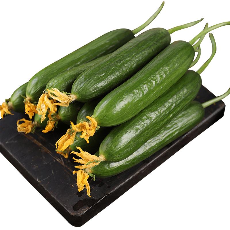 【净重5斤】现摘寿光水果黄瓜