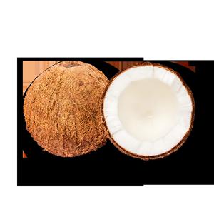 海南老椰子新鲜4个装包邮椰宝炖汤