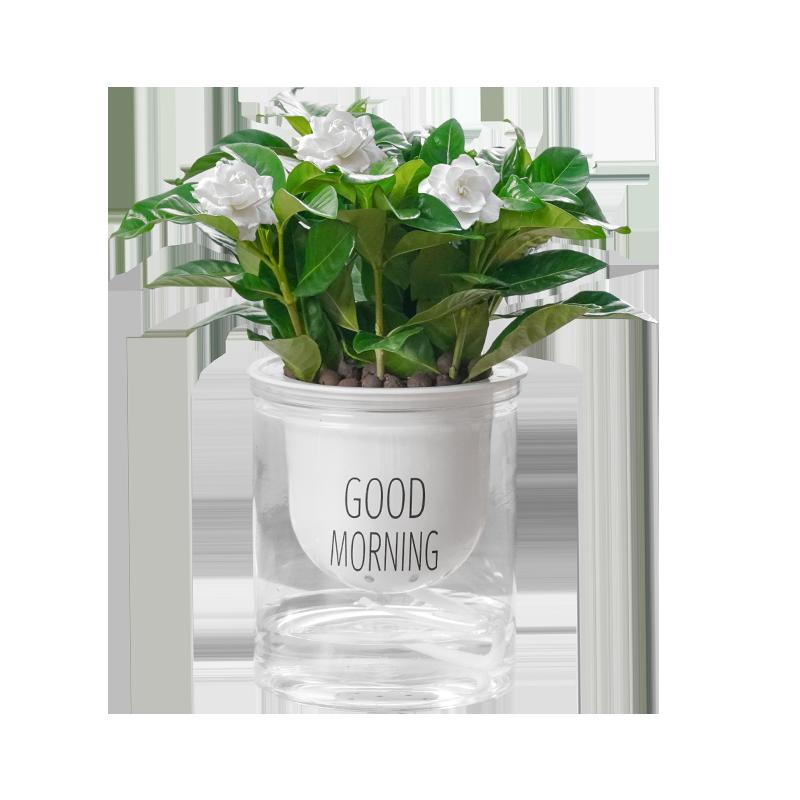 绿植盆栽带盆室内办公净化空气