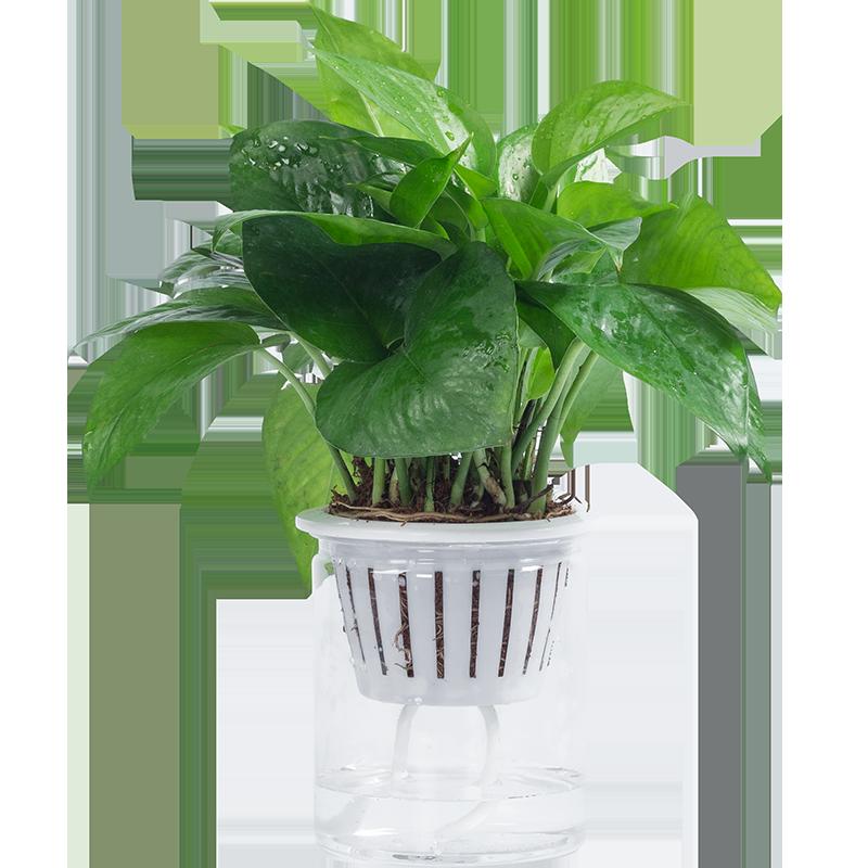 【迷糊妞】办公室水培植物盆栽
