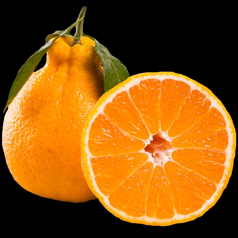 丑橘丑桔10斤水果丑橘子丑八怪新鲜包邮薄皮柑橘不知火四川耙耙柑
