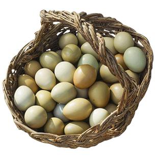 買一送一山雞蛋共發60枚七彩山雞蛋野雞雜糧散養新鮮農家草土雞蛋