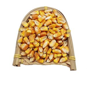 玉米粒干苞米粒粗粮饲料打窝鱼饵