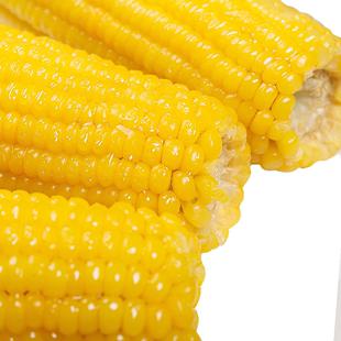 穗康甜糯黏玉米棒子包邮10支