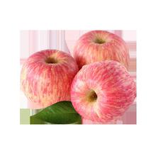 现摘山东烟台红富士苹果5斤