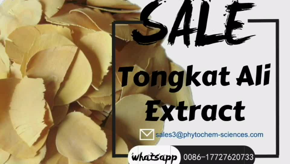 tongkat ali indonesia Eurycomanone pure herbal powder root extract 200 1 tongkat ali