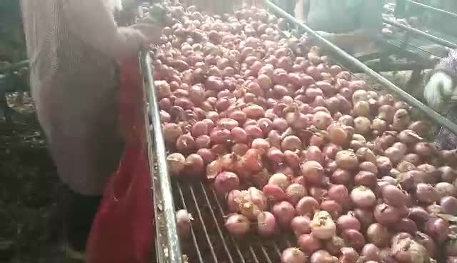 Fresh Onion Export To Dubai Price Philippines  Per Ton