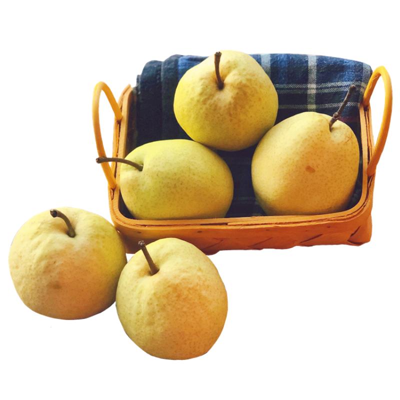 山西酥梨贡梨梨子带箱十斤新鲜当季应季水果整箱包邮文水万亩梨园