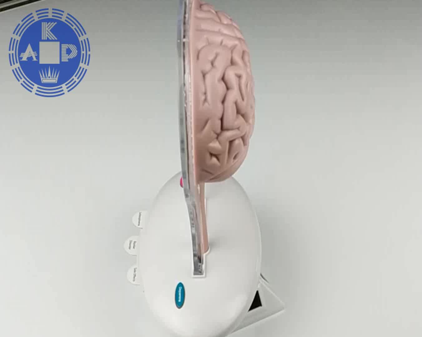 Tıbbi hediyeler promosyon ürün öğretim beyin LED