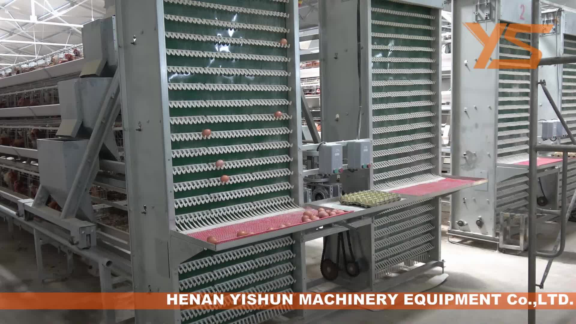 Layer Chicken Automatic Egg Collect Machine for Poultry Farm Equipment