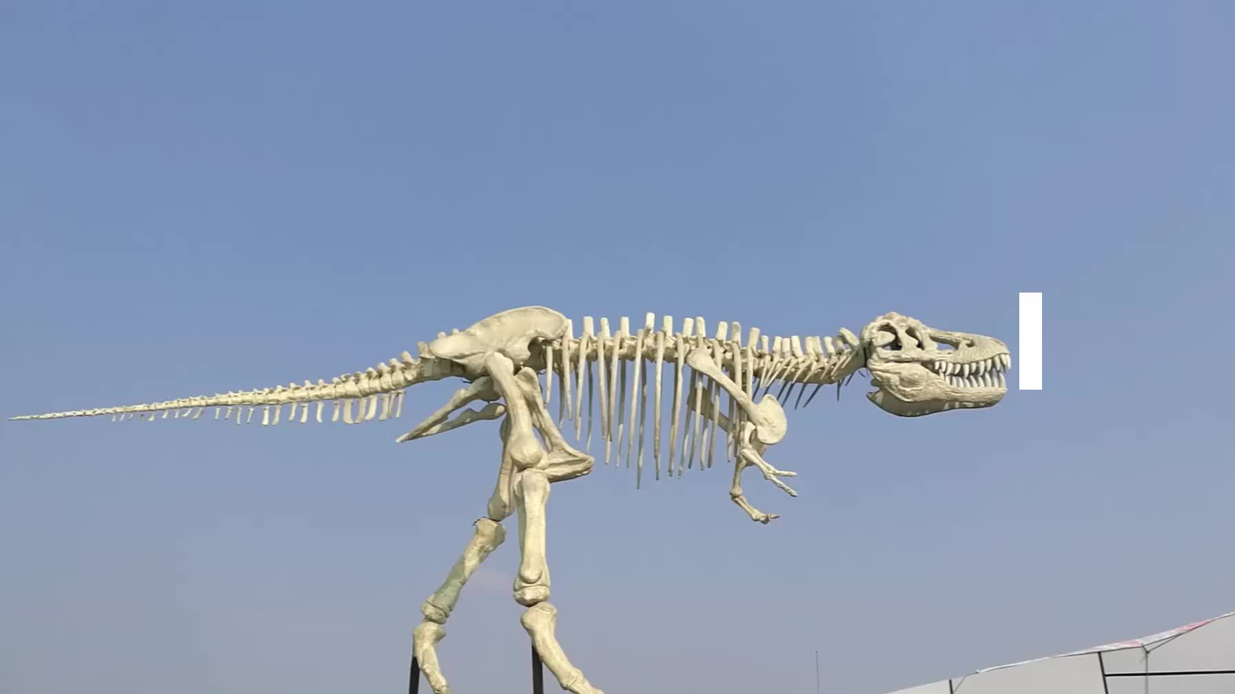 My-dino AJU26-3 Museum Fluorescent Artificial Silicon Dino Skeleton For Display
