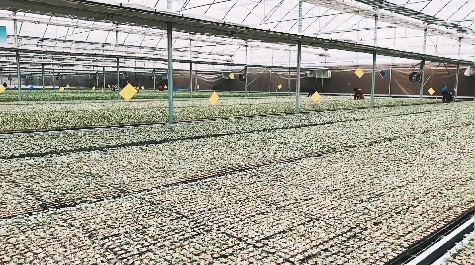 Plana planta bandejas/arranque semilla crece bandejas