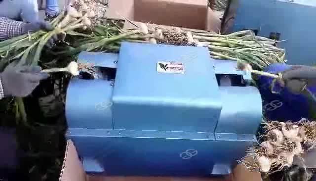 Garlic Processing Machine Garlic Root Cutting Machine