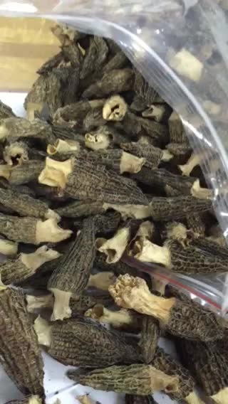 yellow brown and dark cultivate dried morchella mushroom