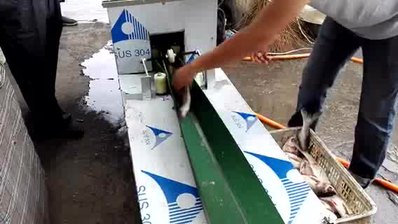 Automatic Stainless Steel Fish Scale Remove Machine Fish Scaling Open Back Machine For Fish Killer