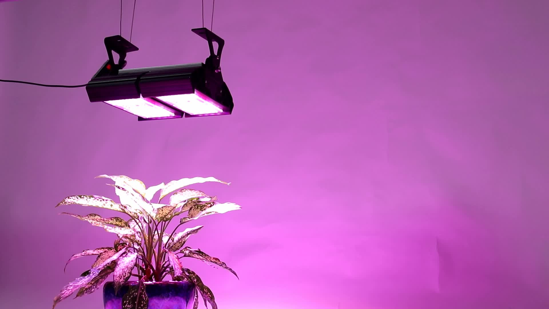 Indoor Growing 200W Led Module Vertical Hydroponic Lights For Plant Grow