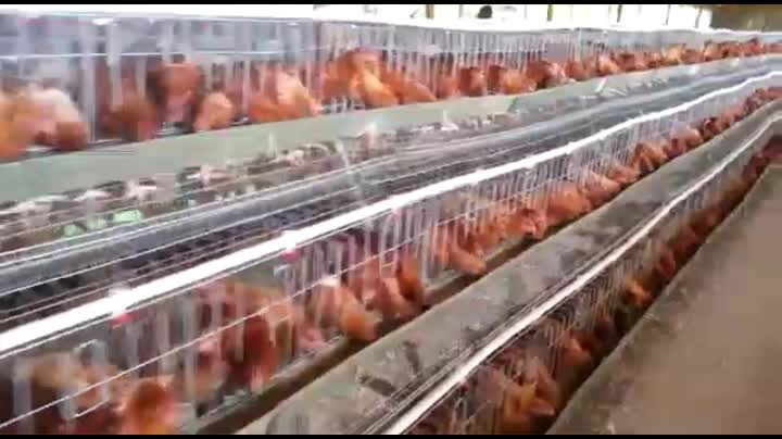 2017 High Quality Chicken Layer Cage For Sale