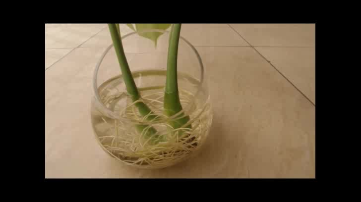 Wholesale Competitive Price, New Design and High Quality Oblique Mouth Clear Crackle Glass Vase
