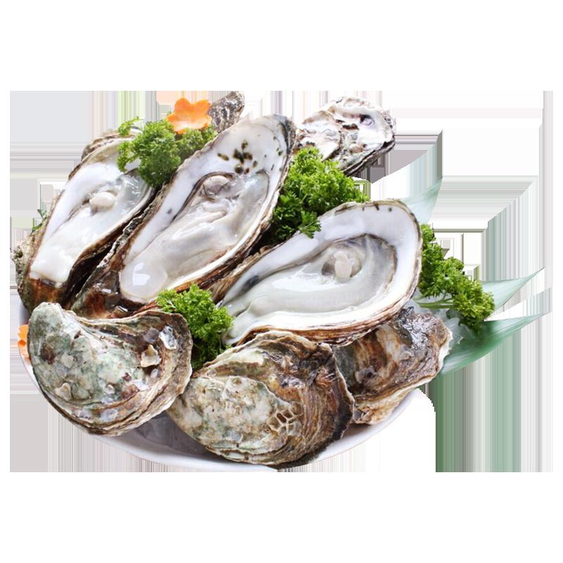 [第2份半价]乳山生蚝鲜活超大牡蛎即食海鲜新鲜海蛎子5斤10斤顺丰