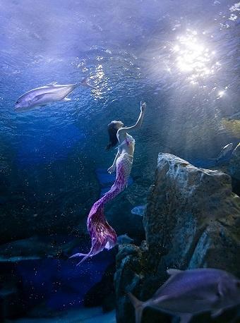 潜先森潜水——SSI基础美人鱼课程