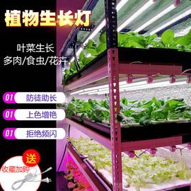 led植物生长灯红蓝白蔬菜工厂大棚育苗室内水培叶菜全光谱补光灯