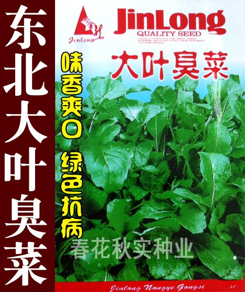 大葉の臭物の種の味は独特で口当たりが良いです。秋のベランダ菜園の鉢植え野菜の種の臭物の種