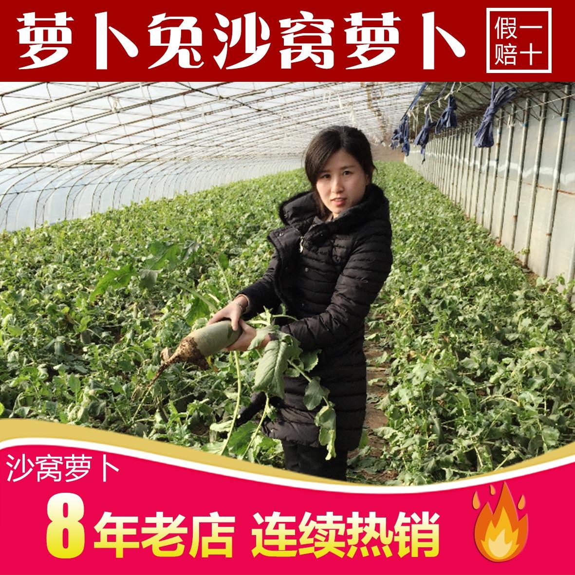 正宗沙窝萝卜脆甜水果萝卜8斤包邮新鲜有机蔬菜原产地非潍坊