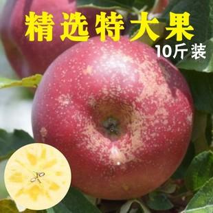 云南农家现摘冰糖心野生丑苹果大果甜脆新鲜水果非红富士10斤包邮