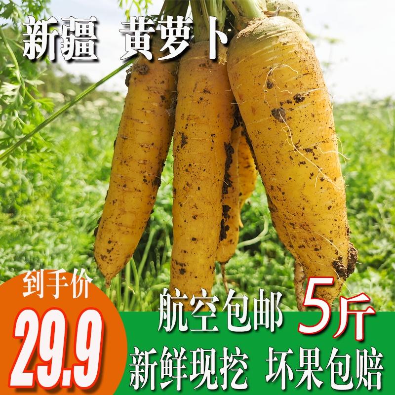 新疆黄心胡萝卜新鲜蔬菜农家自种带泥黄胡萝卜抓饭专用宝宝辅食