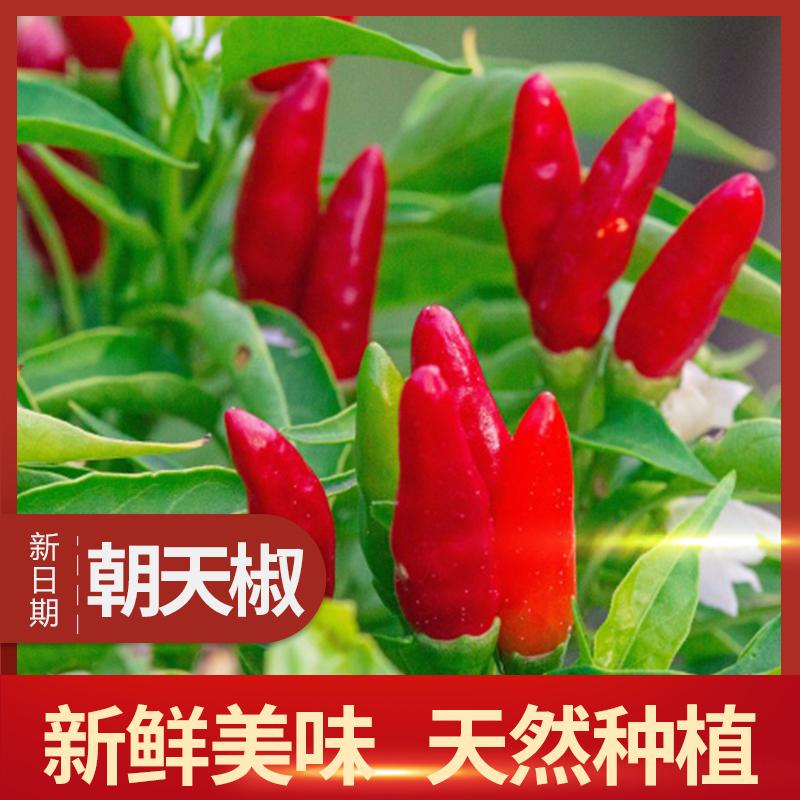 朝天椒1斤原色原味无污染零添加适合老中青调味食用的农产品厨房