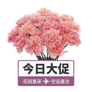 【花年】多色康乃馨花束20朵鮮花速遞百合花玫瑰花空運到家KNX