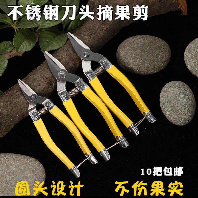 罗定不锈钢果剪新款采柑桔果摘果剪