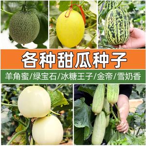 瓜种大全四季甜瓜种籽种子苗秧绿宝石羊角蜜香瓜哈密瓜孑老品种