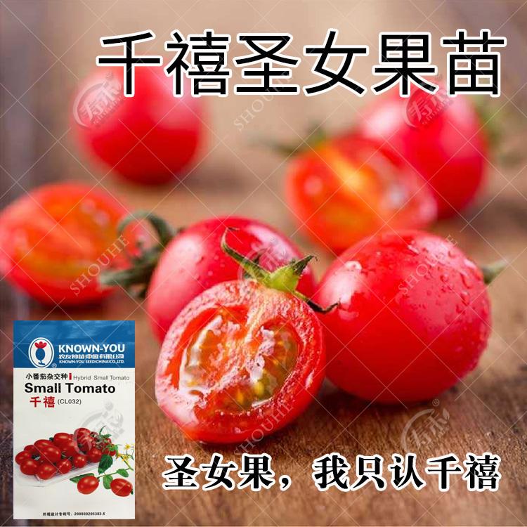 农友千禧圣女果种子 樱桃小番茄 盆栽西红柿蔬菜种苗 圣女果苗