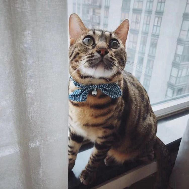小橘商店 日本派地奥Petio猫小町蝴蝶结猫咪项圈猫铃铛和风猫项链