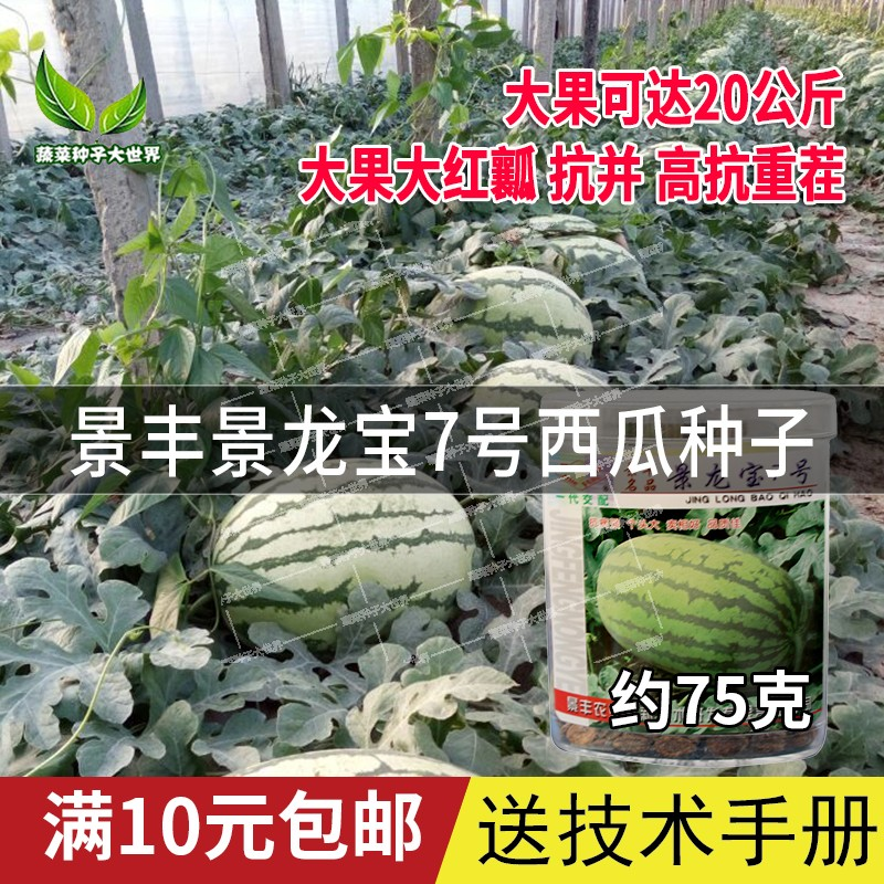 Jingfeng jinglongbao No.7 watermelon seed is authentic, Xinong lazy melon is storable and transportable, watermelon seed is high yield