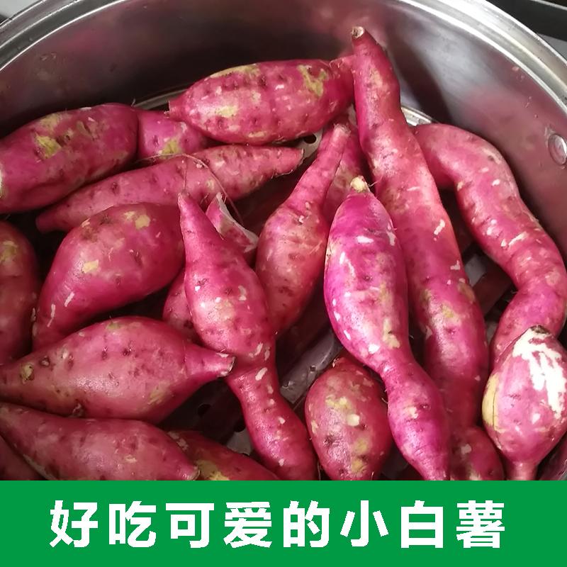 小白薯 拇指红薯小蜜薯 农家自种岗坡红薯5斤包邮热销21件有赠品